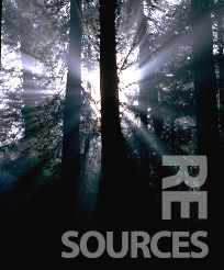 "Picture of Trees in a Forest that says ""Resources"""